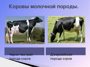 Молочная продуктивность коров в зависимости от влияния различных факторов