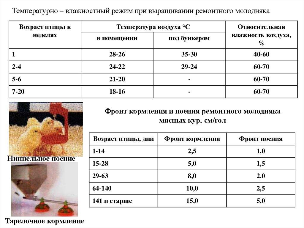 Температура для цыплят: требования к температурному режиму содержания, использование коврика для обогрева, теплого пола и обогревателя