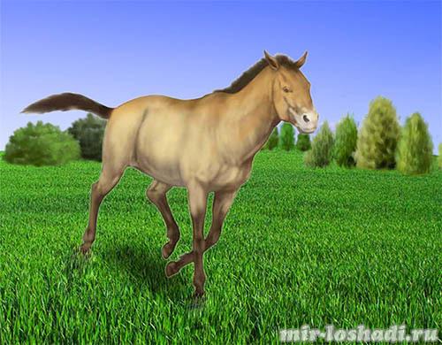 Иппология — наука, изучающая лошадей