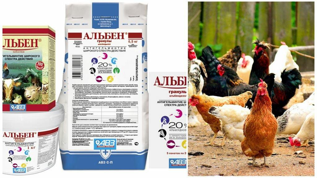 Таблетки альбен: инструкция по применению препарата для кур от глистов в ветеринарии, как его давать птицам и отзывы об этом