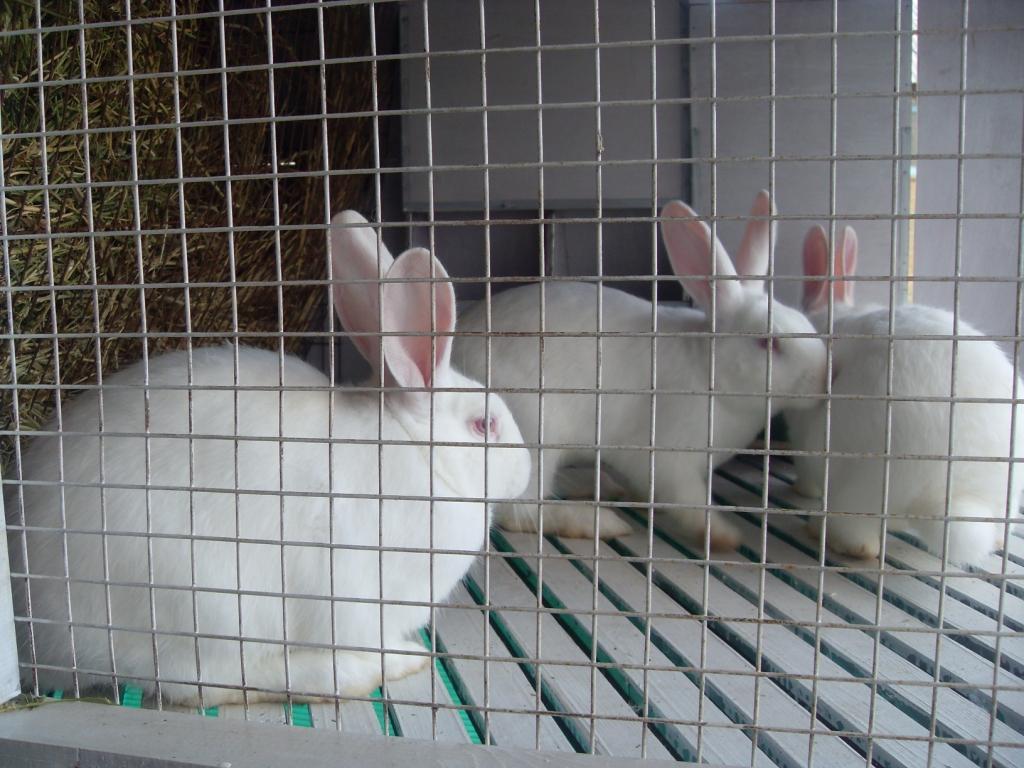 Правила разведения и содержания кроликов с нуля в домашних условиях