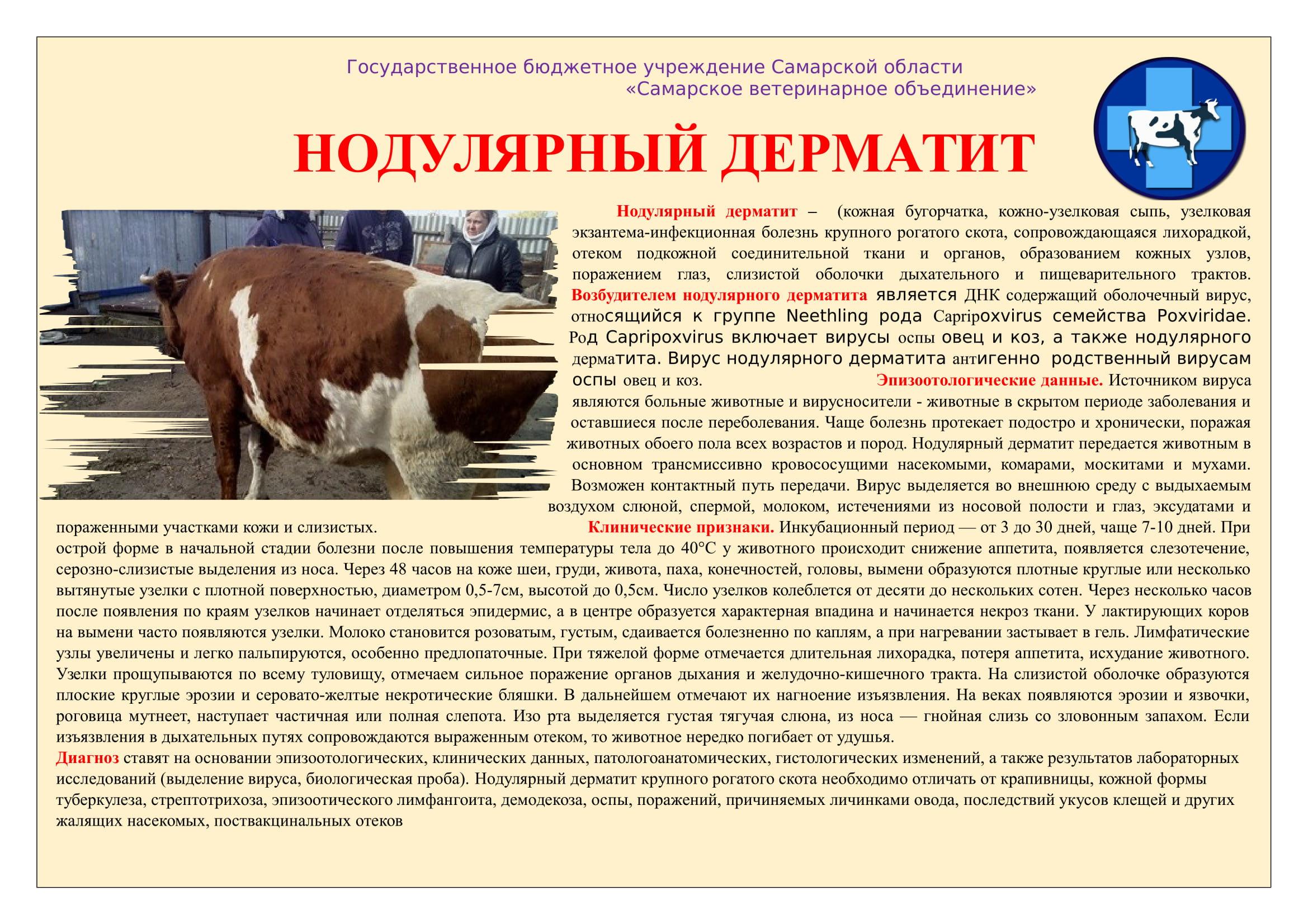 Инструкция по нодулярному дерматиту крупного рогатого скота