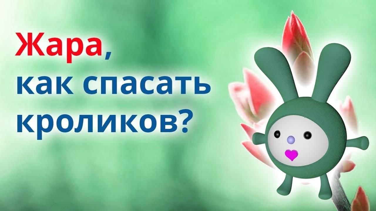 Как помочь кролику при тепловом ударе - wikihow