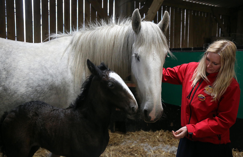 Как запрячь лошадь: способы, последовательность и рекомендации - общая информация - 2020