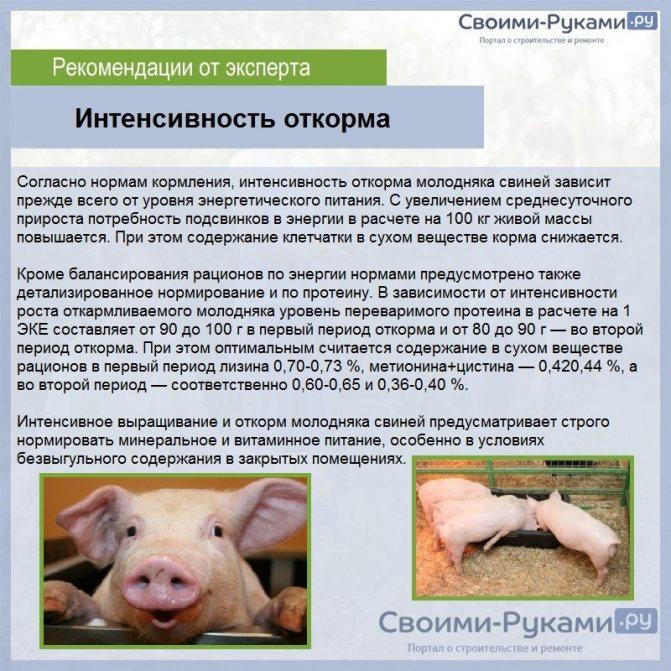 Комбикорм для свиней: состав и польза, рецепт приготовления своими руками
