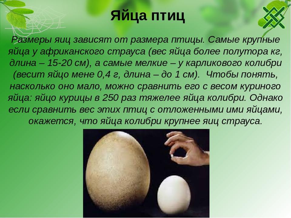 Почему куриные яйца бывают разного цвета и зависит ли количество полезных веществ от оттенка скорлупы