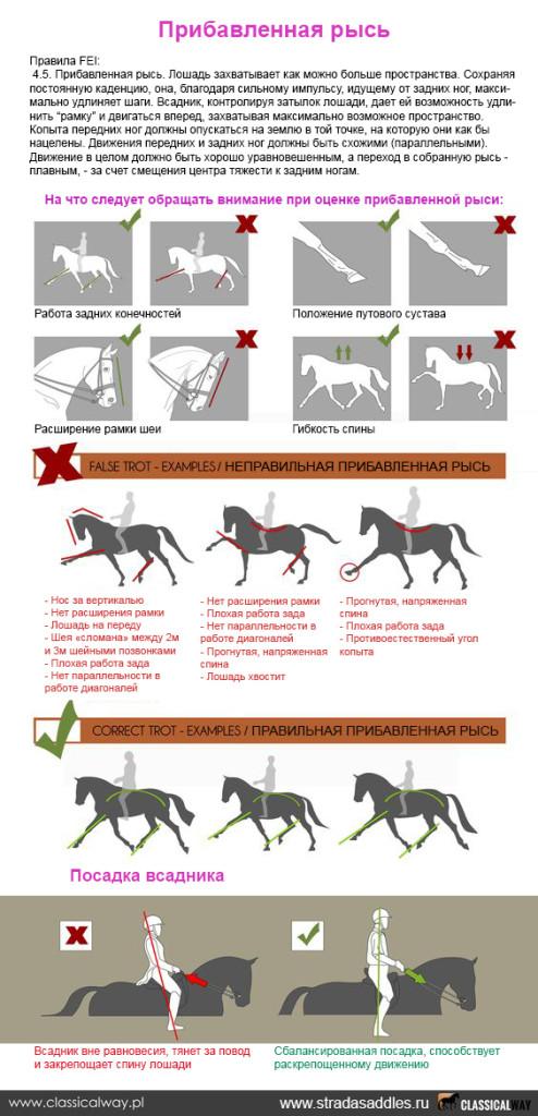 Как научить лошадь иноходи - инженер пто