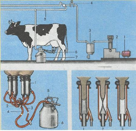 Доильный аппарат для коров — модели, конструкции, виды, варианты применения, эффективность и основные параметры (105 фото и видео)