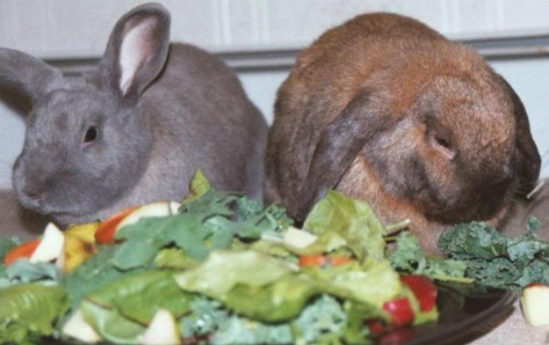 Чем кормить кроликов для быстрого набора веса и как правильно это делать
