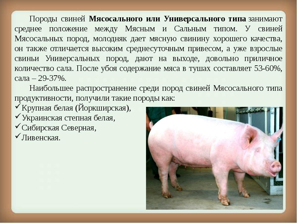 Черные свиньи (29 фото): описание крупных русских черных свиней и других пород. кормление маленьких поросят и взрослых свиней