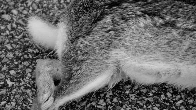 Почему у кролика отказали задние лапы