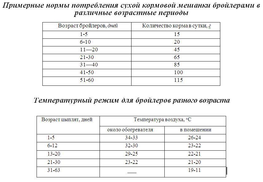 Условия температурного режима для бройлеров