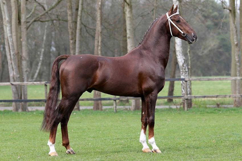 Скакун: скаковые лошади — верховые породы