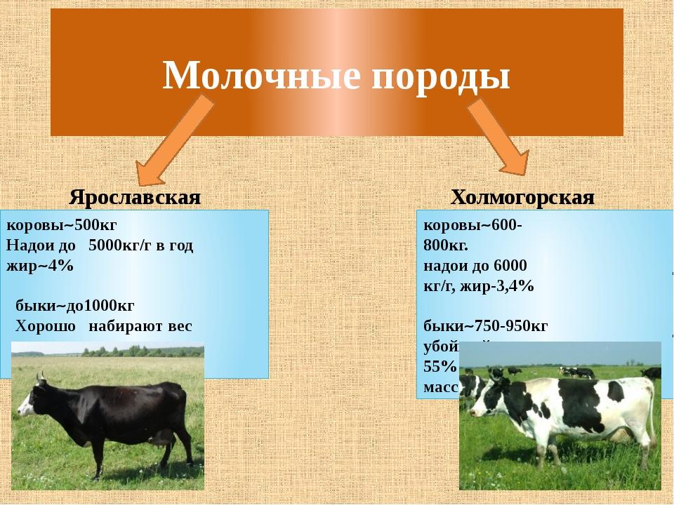 Факторы, влияющие на уровень молочной продуктивности коровы – аграрий