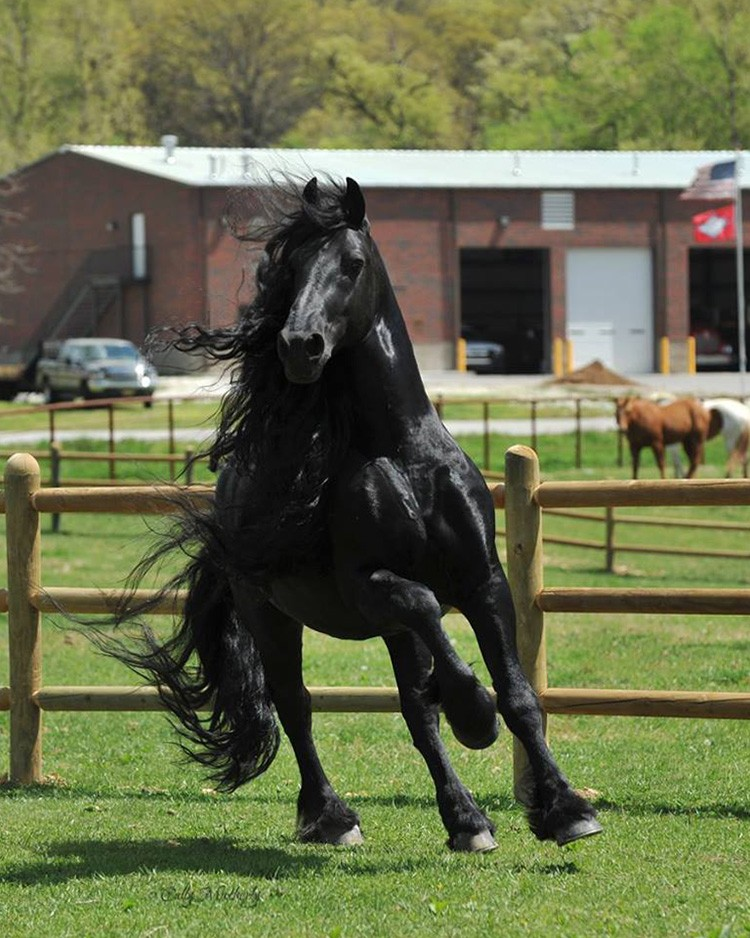 Невероятно красивые и самые прекрасные лошади мира