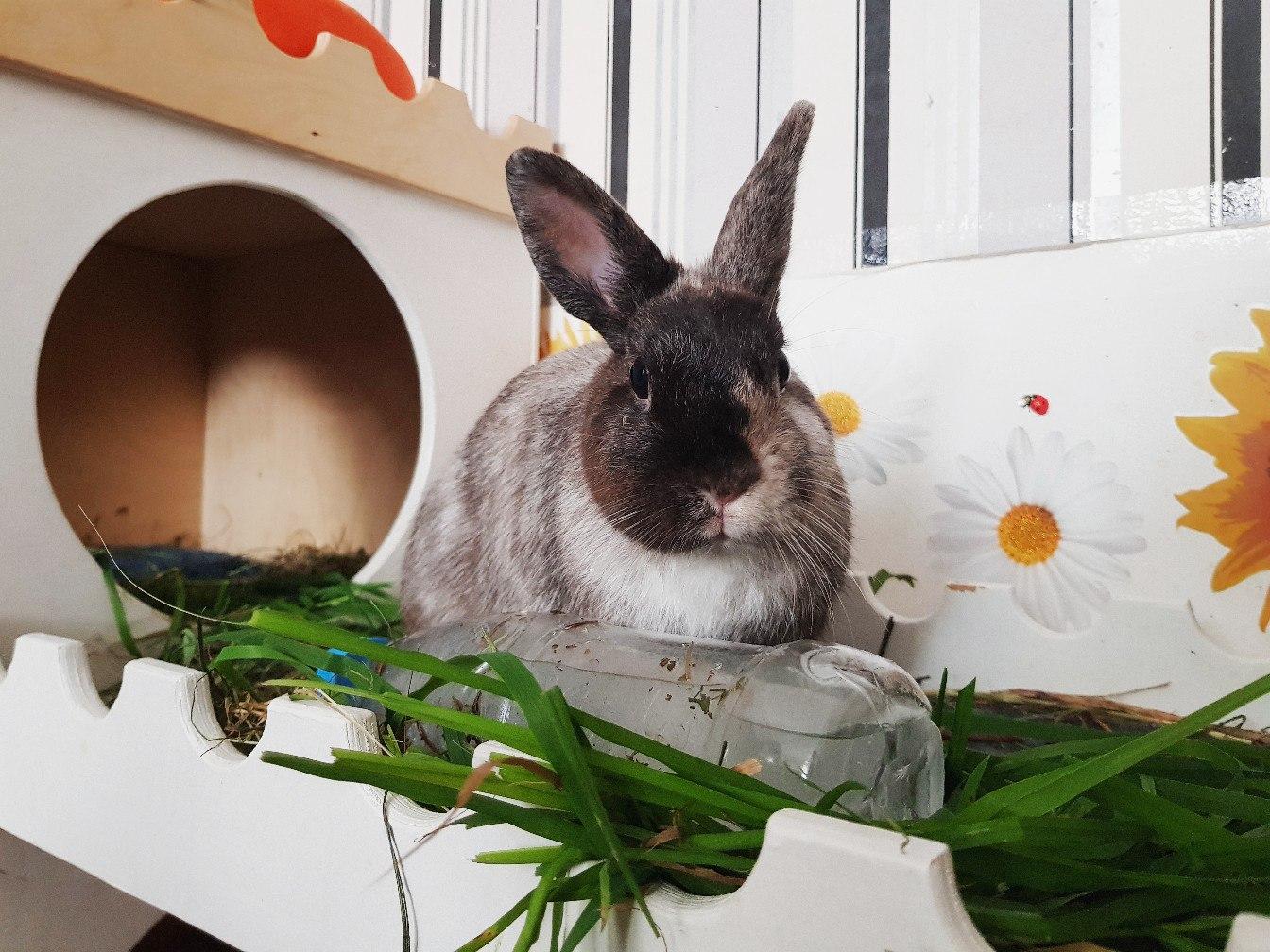 Разведение декоративных кроликов: особенности содержания и ухода