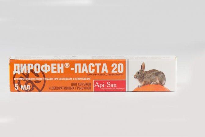 Как бороться с глистами у грызунов и кроликов: дегельминтизация