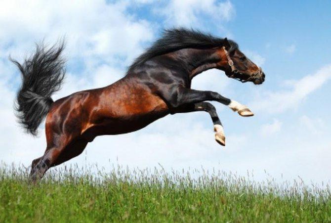Скорость лошади: разновидности движений и их особенности