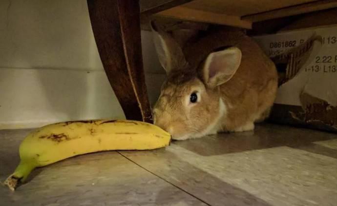 Полезны ли кабачки для кроликов?