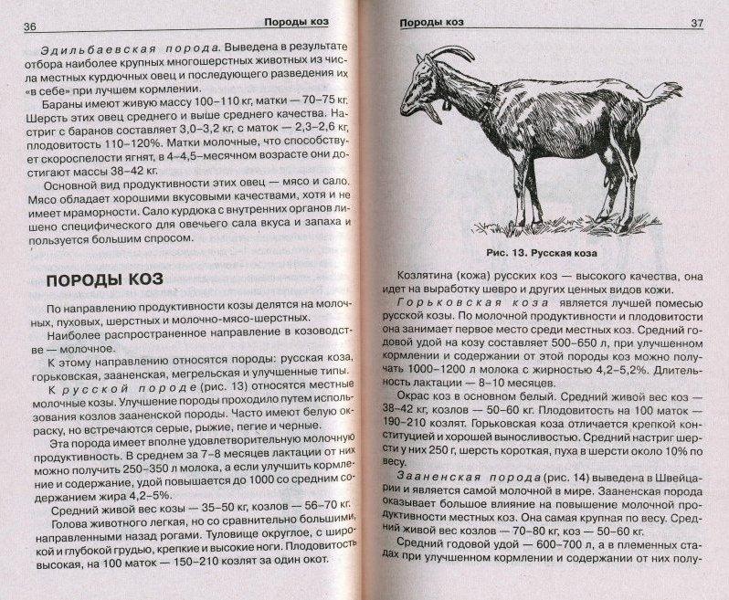 Зааненские козы - лучшая молочная порода