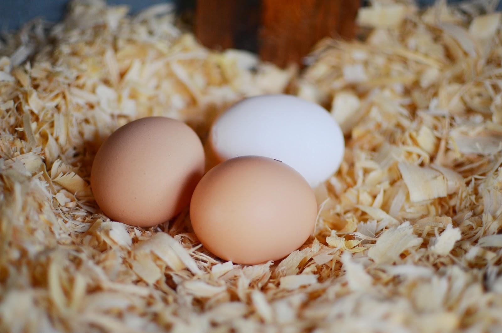 Что означает отсутствие скорлупы на куриных яйцах?