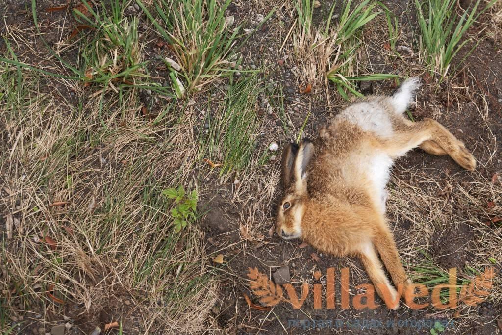 ᐉ падеж кроликов без видимых признаков болезни: дохнут крольчата - zoo-mamontenok.ru
