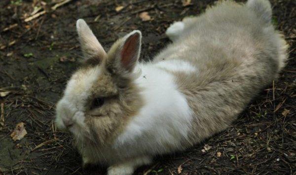 Можно ли вылечить паралич у кроликов - oozoo.ru