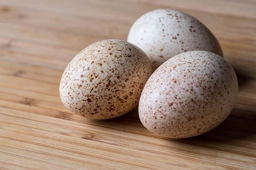 Яйца цесарки: особенности строения, полезные свойства и вред, в каких областях применяется