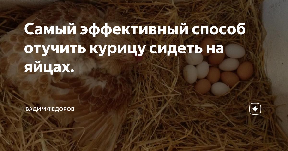Как отучить курицу садиться на яйца (вывести из состояния наседки)