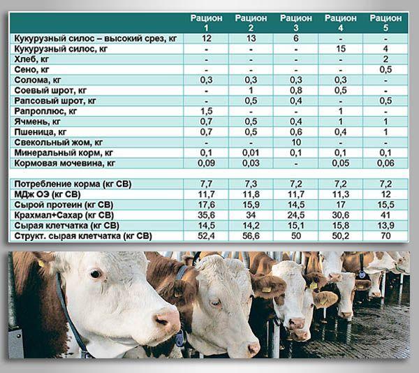 Как кормить теленка и его вес по месяцам