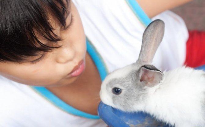 Как приучить декоративного кролика к рукам и дрессировать в домашних условиях