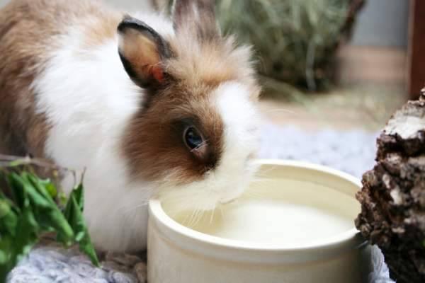 Кролик не ест