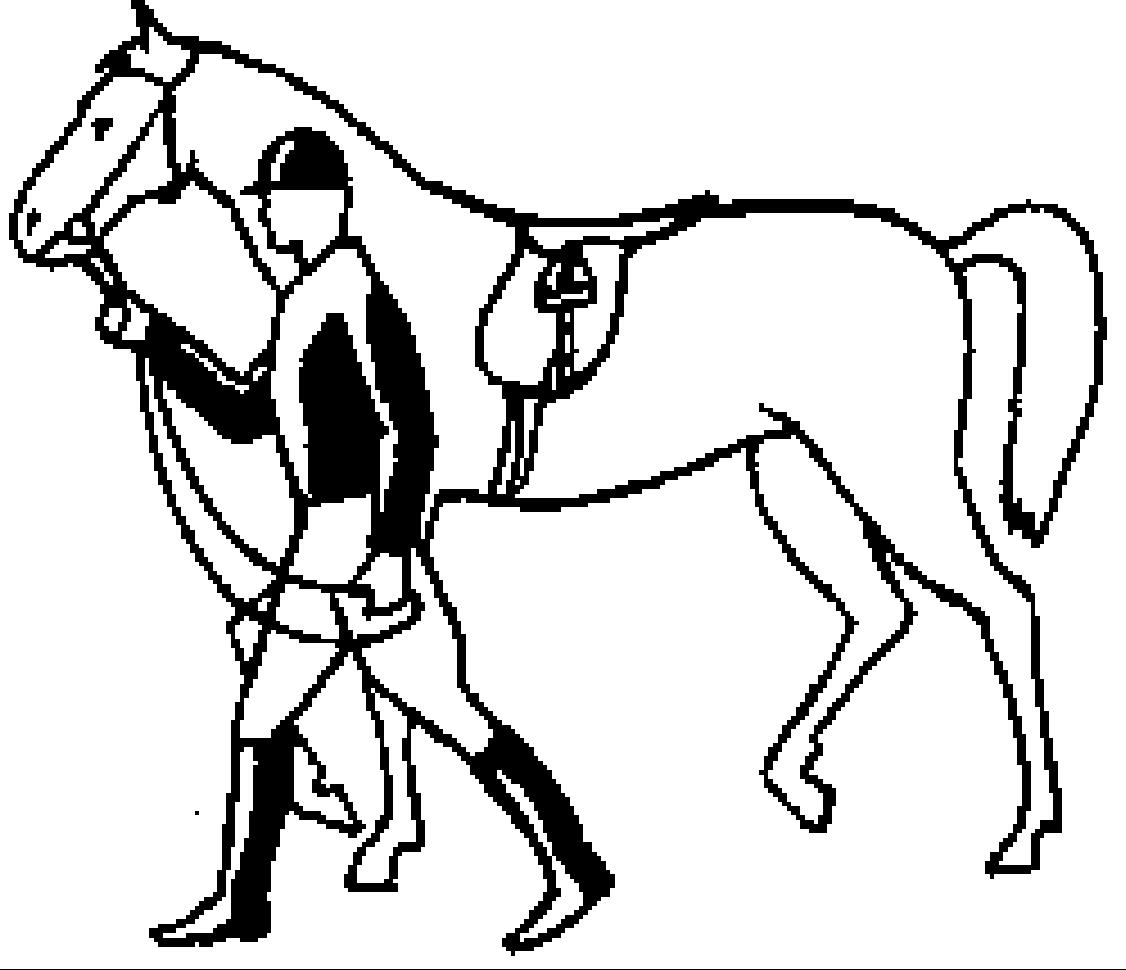 Как правильно ездить на лошади? 2020