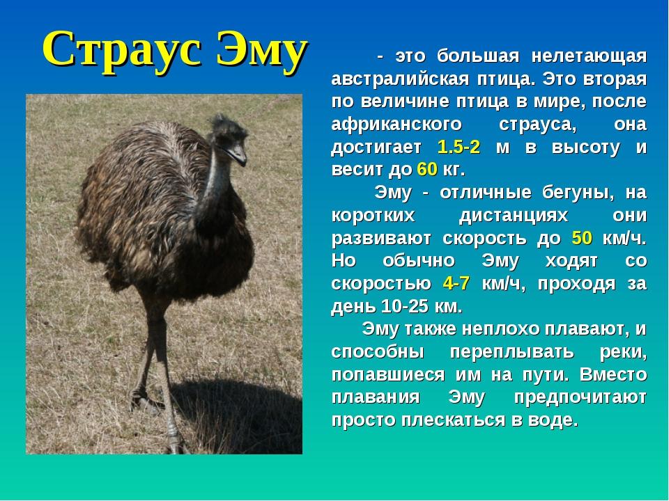 Африканский страус ? фото, описание, ареал, питание, враги ✔