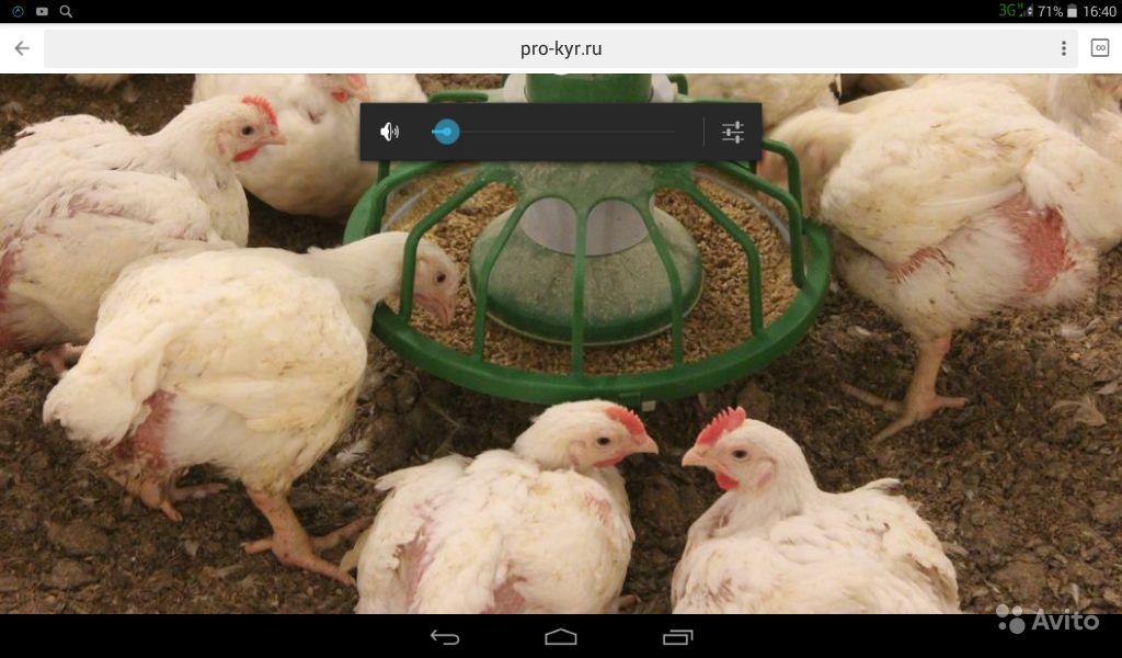 Почему плохо растут цыплята бройлеры и как помочь им набирать вес