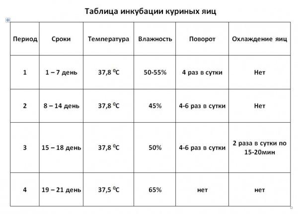 Инкубация фазаньих яиц в домашних условиях: режим инкубации, таблица, температура