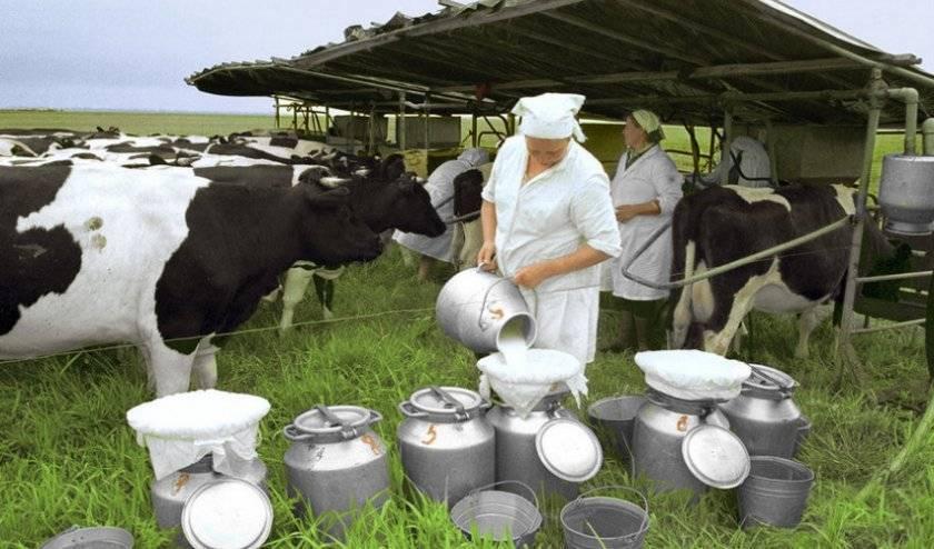 Плотность молока, химический состав молока, кислотность молока