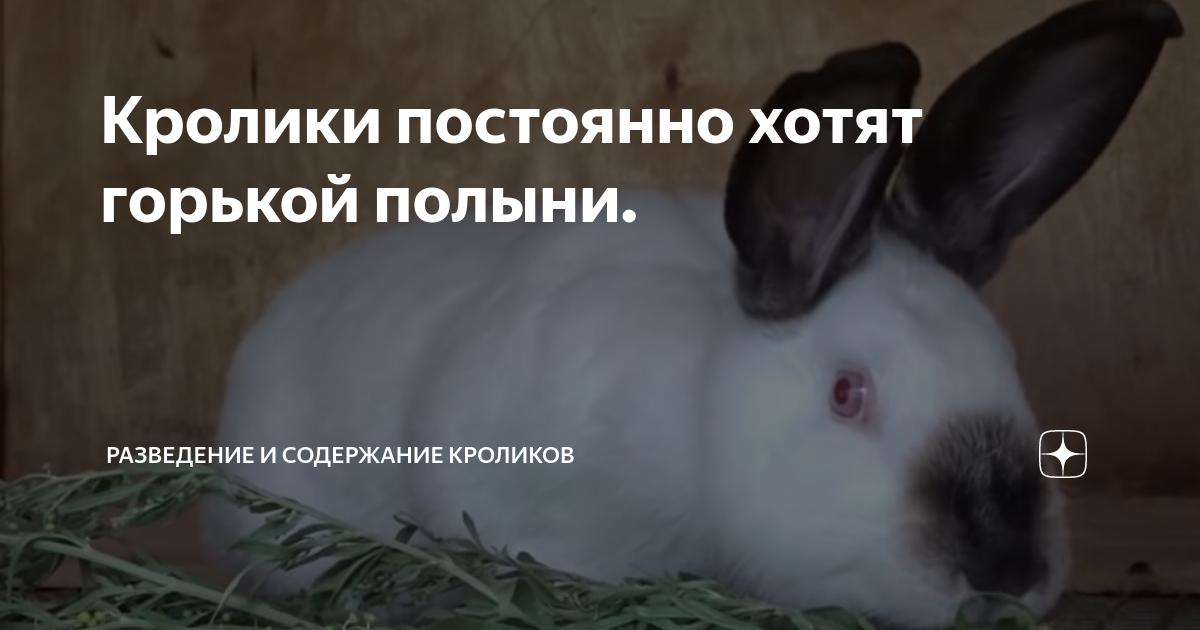 Можно ли давать полынь кроликам? польза или вред?
