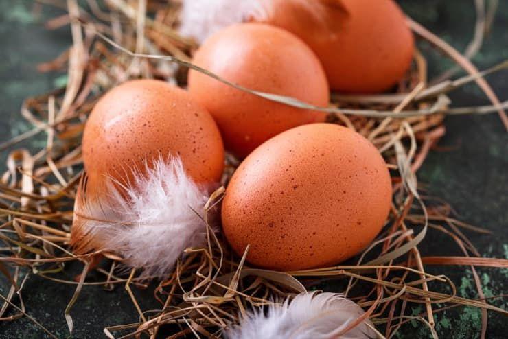 Причины, по которым куры дают яйца в пленке, без скорлупы. как устранить и предупредить проблему