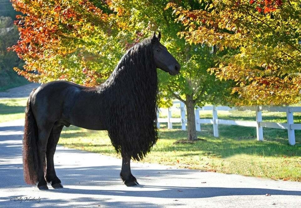 Самые красивые, большие, маленькие и быстрые лошади в мире