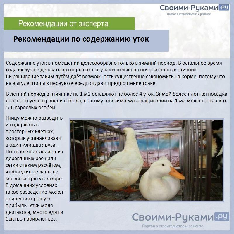Продолжительность жизни гусей в домашних условиях
