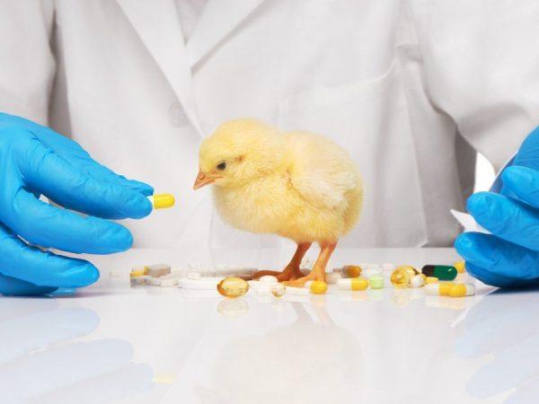 Птичье средство от инфекций – энрофлон