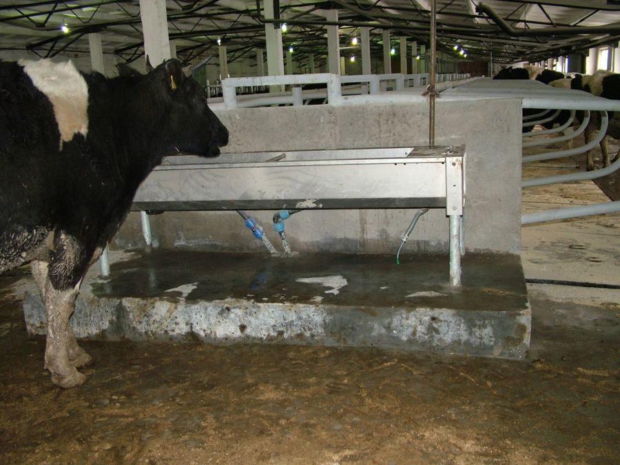 Как сделать кормушку для коровы своими руками