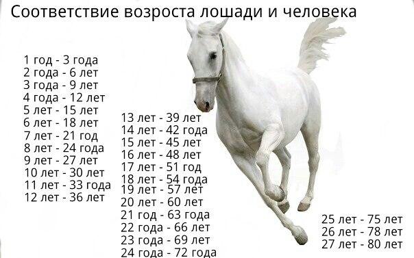Как определить возраст лошади? 2020