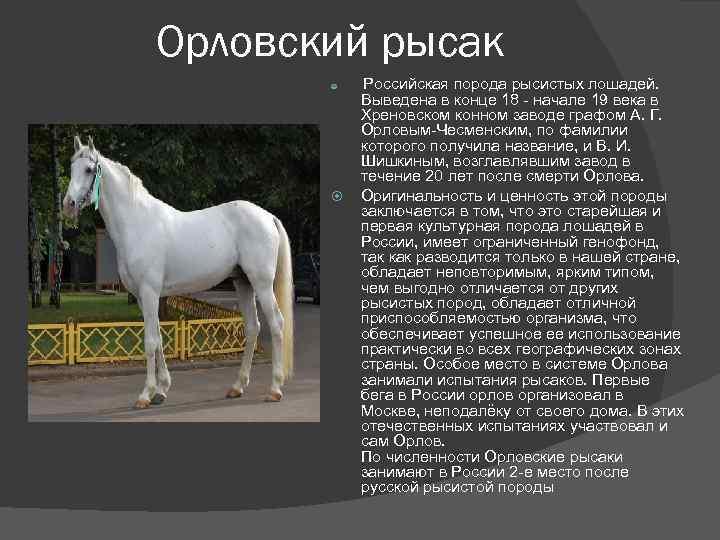 Русский рысак: история, описание, характер, фото