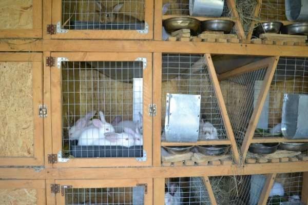 Клетки для кроликов (65 фото): большие клетки для разведения. где разместить деревянную двухъярусную кроличью клетку и другие модели для уличного содержания?