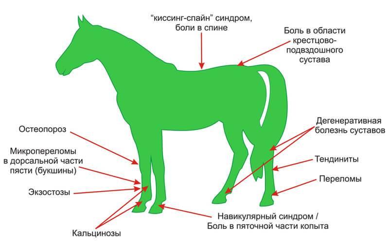 Болезни лошадей: симптомы и лечение