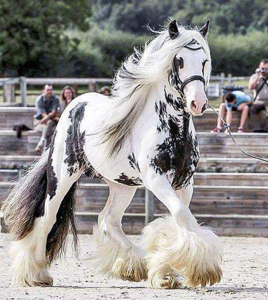 Топ-10 самых красивых пород лошадей