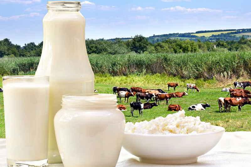 Все факты о козьем молоке: есть ли в нем лактоза, что еще там содержится? мифы и правда о продукте