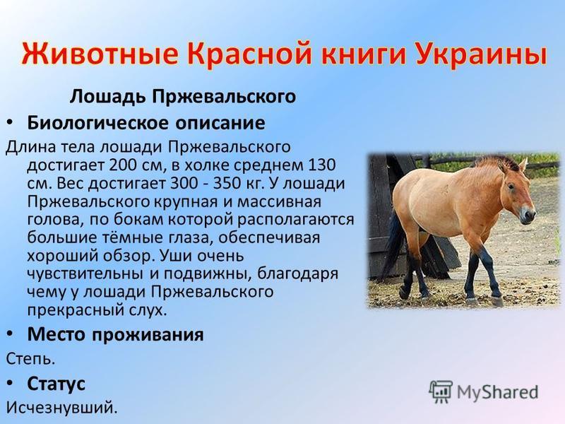 Лошадь пржевальского – проблемы дикого вида 2020